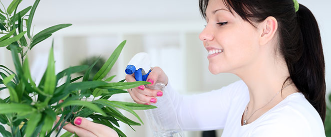 Watering plants - indoor air quality